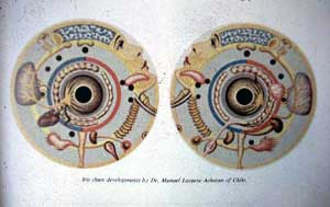 Старинная схема проекционных зон органов человека на радужках левого и правого глаз